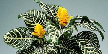 خرید گل های زیبا بصورت انلاین با قیمت مناسب در وی ای پی شاپ