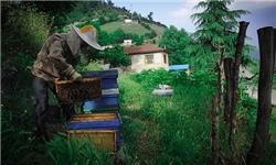 تولید عسل در ایلام افزایش یافته است