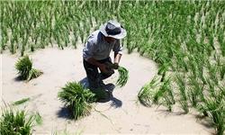 کشاورزی سنتی اصفهان در حال نابودی است