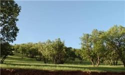 پارک ملی بموی شیراز برای متخلفان ناامن شد