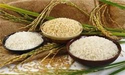 قیمت خرید حمایتی ارقام مختلف برنج اعلام شد