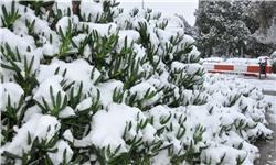 برف تا روز چهارشنبه مهمان کرمانشاهیهاست