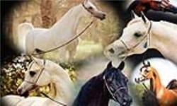 اسب فارس برندی که فراموش شده است