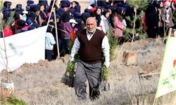اجرای بیش از 8 هزار هکتار جنگلکاری در شهرستان دشتی