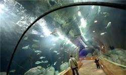 ساخت بزرگترین تونل آکواریوم کشور منتظر تحقق وعده شورای شهر است