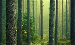 توسعه 200 هکتار جنگل در اردبیل/پایلوت کشت فندق کشور را دنبال میکنیم