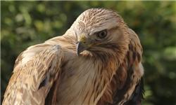 12 پرنده وحشی در استان قم از متخلفین کشف و رهاسازی شدند