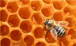 پدیده ریزگردها مانع عملکرد مطلوب زنبور عسل در سال گذشته شد