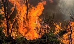 بحران آتشسوزی در جنگلهای آرژانتین+تصاویر