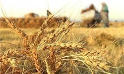 دولت زمینهای کشاورزان دوردزن را در اختیار حفاران چاه غیرمجاز قرار داده است