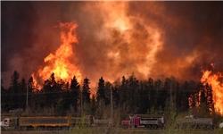 وقوع 4 آتشسوزی در دشتی/ 230 اصله نخل در آتش سوخت