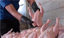 25 درصد از صادرات مرغ کشور توسط گلستان انجام میشود