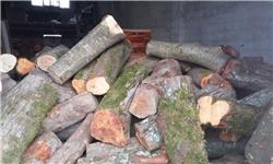 خروج صدها کامیون چوب از دل جنگلهای مرزنآباد!/ چه کسی پاسخگوست؟