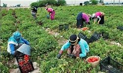 ارائه تسهیلات 4 درصدی به تشکلهای کشاورزی فعال در گلستان