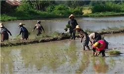 چشمان کشاورزان مازندرانی به آسمان و منابع آبی که در حال کاهش است