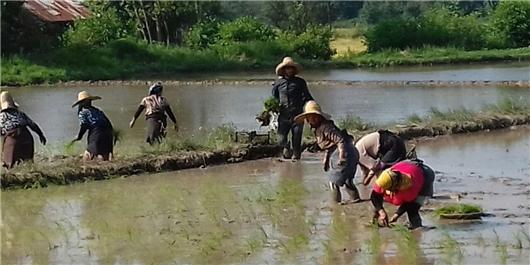 شرایط پرداخت ۱۲ هزار میلیارد تومان تسهیلات اشتغال در روستاها/ عاملیت ۴ بانک برای تسهیلات