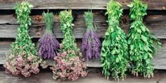 درآمد 6 میلیون تومانی کشت گیاهان دارویی  در هر هکتار عرصههای منابع ملی/تعادل مرتع و دام با کشت گیاهان دارویی