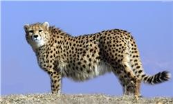 آمادگی مرکز مراقبت از حیاتوحش پارک ملی بمو برای درمان حیوانات آسیبدیده/ تماس با اورژانس حیوانات از طریق سامانه 1540