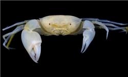 خرچنگ تازه کشف شده «هری پاتر» نام گرفت
