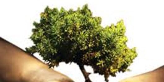 12هزار اصله نهال در هفته منابع طبیعی توزیع خواهد شد