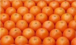 امسال وضع بازار پرتقال خوب است/ نیازی به واردات نیست