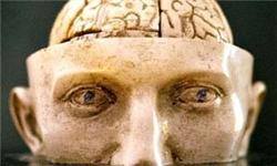 تبیین رشد انسان بر اساس صورتبندی پیوستار مفهوم شناختی تعقل