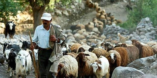 سفر به روستای پنیر