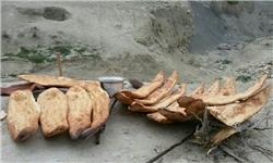 سابقه پخت نان توسط بشر به 14 هزار سال قبل رسید