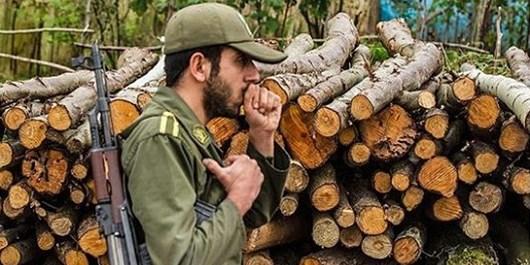خروج صدها کامیون چوب از دل جنگلهای مرزنآباد!/چه کسی پاسخگوست؟