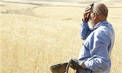 50 درصد گندم گلستان برداشت شده است/ تزریق 170 دستگاه کارنده جدید به ادارات جهاد کشاورزی گلستان
