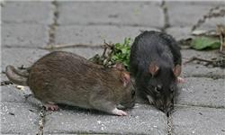 فیلم/ شایعه حمله موشهای آدمخوار به مردم تهران