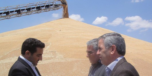 خرید گندم مازاد بر نیاز از مرز 150هزار تن گذشت