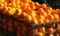 فیلم/ فروش پرتقال های شب عید در تابستان