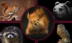 فیلم/ تلفات زیاد پرندههایی که در تایر ماشین قاچاق میشوند/ نگهداری از حیوانات وحشی و رهاسازی در طبیعت
