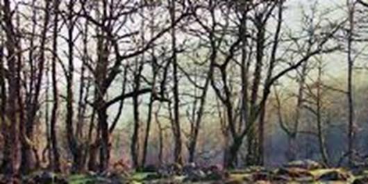 کاری نکنیم نوار سبز کشور از بین رود/لزوم پرهیز از روشن کردن آتش در طبیعت مازندران
