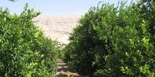 بیش از 3 هزار هکتار باغ در مناطق سردسیری چرام نیازمند آبرسانی با تانکر است