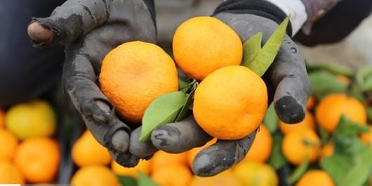 پرتقال مهمانپسند و مجلسی به اندازه کافی داریم/ حیدرپور: با صدای رسا میگوییم  نیازی به واردات نیست