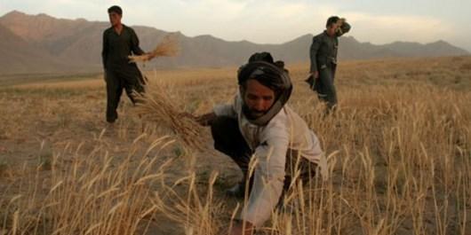 پیگیری برای پرداخت خسارت به کشاورزان اصفهانی