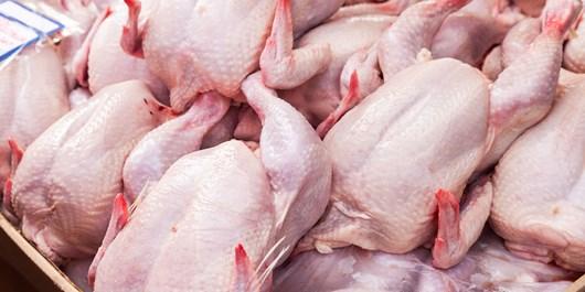 اختلاف عجیب قیمت مرغ همدان با نرخ ستاد تنظیم بازار/ ما هم گلایهمندیم!