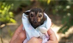به نوزاد تنهای جانوران وحشی دست نزنید/ آنها را از زیستگاه طبیعی جدا نکنید