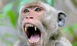 فیلم/ حمله میمونها در هند!
