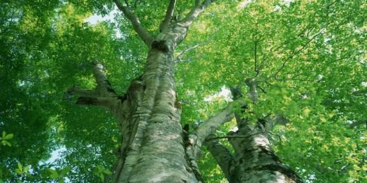 آغاز طرح شناسنامهدار کردن درختان سطح تبریز