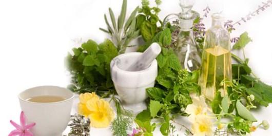 گیاهان دارویی ظرفیتی برای خلق ثروت در فارس است/معضل پرورش گیاهان دارویی با کود شیمیایی