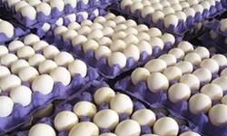 تخممرغ با نرخ 14 هزار 500 تومان باید به مردم برسد/ قرار نیست تخممرغ گرانتر شود