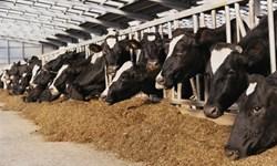 نرخ دولتی خوراک دام برای دامپروریها