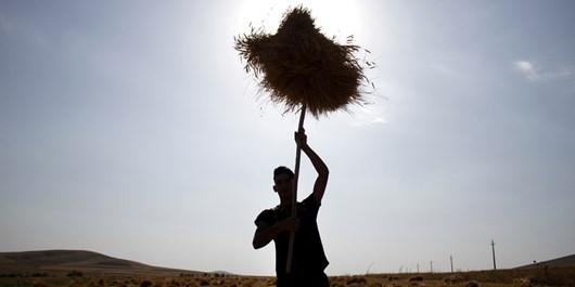 80 درصد مطالبات گندمکاران گرمساری پرداخت شد