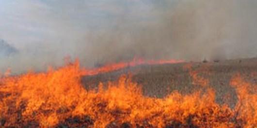 خوشگذرانی عدهای جوان دو هکتار زمین سبز روستا را خاکستر کرد/فرماندار ساوجبلاغ علت آتشسوزی را سهلانگاری اعلام کرد