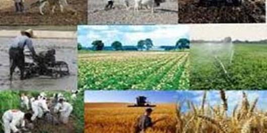 اراضی زراعی استان البرز تأمینکننده سبد غذایی خانوادههای ایرانی/نگاه ملی برای رفع چالشهای متعدد ضروری است