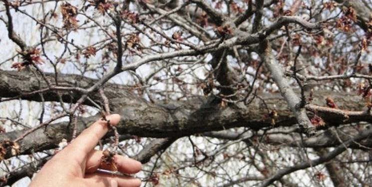 هشدار به باغداران و گلخانهداران آذربایجان غربی درباره سرمازدگی بهاره