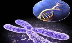 دانشگاه علوم پزشکی مشهد ظرفیتهای مناسبی در زمینه سلولهای بنیادی و طب بازساختی دارد